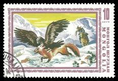 Eagle d'or et Fox rouge photographie stock libre de droits