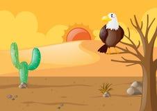 Eagle dans le désert sec illustration libre de droits