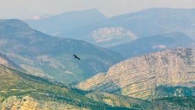 Eagle, das über schöne Landschaft der Verdon-Schlucht in Fra fliegt Stockbilder