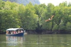 Eagle, das auf Bootsfahrt bei Pulau Langkawi, Malaysia aufpasst Stockfotografie