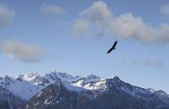 Eagle, das nahe alaskischen Bergen fliegt Lizenzfreies Stockbild