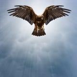 Eagle in de donkere hemel Stock Foto