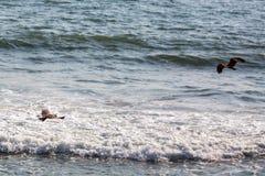 Eagle-de jacht op de oceaan Stock Afbeelding