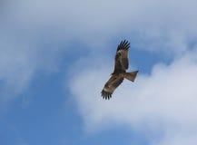 Eagle de oro. Foto de archivo libre de regalías