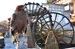 Eagle delante de la rueda hidráulica foto de archivo libre de regalías