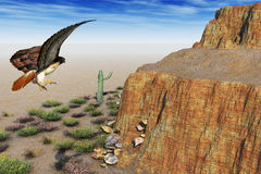 Eagle in the desert Stock Image