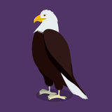 Eagle design Royaltyfria Bilder