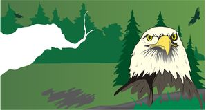 Eagle design - vector Stock Photography