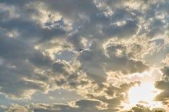 Eagle die in de hemel met wolken vliegen stock foto's