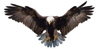 Eagle die hand landen trekt op witte vector als achtergrond Stock Afbeeldingen