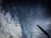 Eagle die hemel vliegen Royalty-vrije Stock Foto
