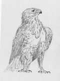 Eagle drawing Stock Photography
