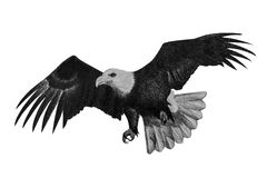 Eagle drawing by pencil Stock Image