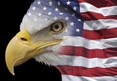 Eagle e bandiera Immagini Stock