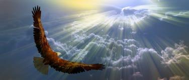 Eagle em voo ilustração stock