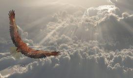 Eagle em voo sobre as nuvens ilustração do vetor