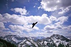 Eagle en el cielo, Alemania Foto de archivo libre de regalías
