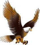 Eagle en Mid Air Fotografía de archivo