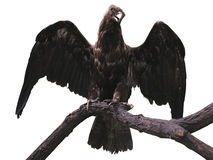 Eagle en una rama con la extensión de las alas aislada sobre blanco Imagenes de archivo