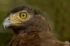 Eagle Eye Royaltyfria Bilder