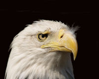 Eagle Eye Stock Photos