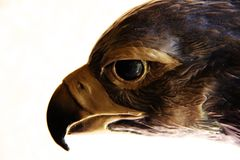 Eagle eye sculpture. A picture of an eagle eye sculpture in Sedona Arizona Stock Photography