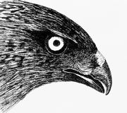 Eagle eyes. Hand-painted pen painting.Eagle eyes Stock Photos