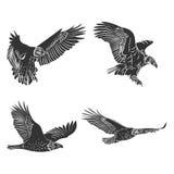 Eagle and falcon silhouettes set. Stock Photo