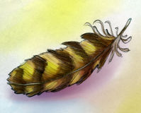 Eagle feather sketch. Hand drawn pencil sketch of an eagle feather, colored Royalty Free Stock Images