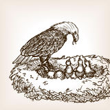 Eagle feeding baby bird sketch vector illustration Stock Photos