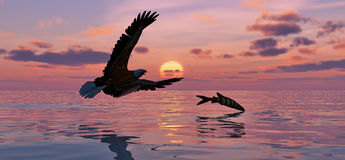 Eagle and Fish. Silhouette against a sunset sky Royalty Free Stock Photos
