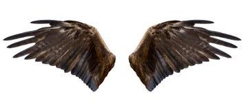 Eagle-Flügel, lokalisiert Lizenzfreies Stockfoto
