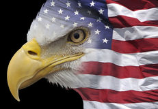 Eagle and flag. Photo combining a closeup of a bald eagle and a US flag Stock Images
