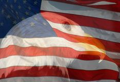 Eagle and Flag. A composite of two photos taken by the author - bald eagle and American flag combined into one photo royalty free stock images