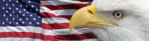 Eagle and flag banner. Banner combining a closeup of a bald eagle and a US flag Stock Images