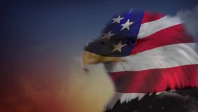 Eagle Flag Matt. This video features an eagle head looking around against a sunset background with an animated flag superimposed on the eagle stock video