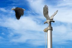 Eagle With Flag Pole Stock Photos
