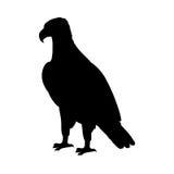 Eagle Flat Design Vector Illustration chauve Photographie stock