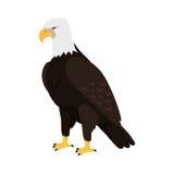Eagle Flat Design Vector Illustration chauve Image stock