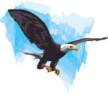 Eagle flaying. In the blue sky Stock Photo