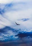 Eagle-Fliegen Lizenzfreie Stockbilder