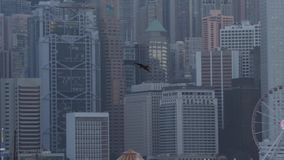 Eagle-Fliegen in Hong Kong stock video footage