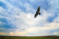 Eagle-Fliegen im bewölkten Himmel Lizenzfreie Stockfotografie