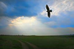 Eagle-Fliegen im bewölkten Himmel Stockbild
