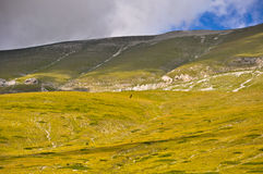Eagle flies on the Monte Vettore, Italian Apennines landscapes. Stock Images