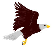 Eagle in flight Stock Image