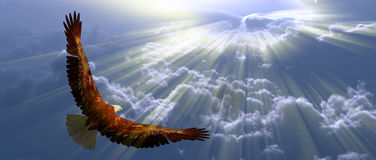 Eagle in flight. Above the clouds in rays of light royalty free stock photo