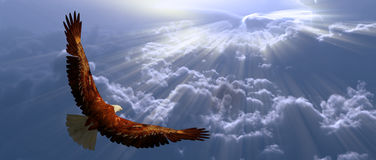 Eagle in flight above tyhe clouds Stock Photos