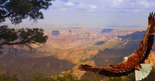 Eagle in flight over Grand Canyon USA Stock Photo