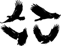 Eagle in fly. 4 eagles in fly, eps formats stock illustration